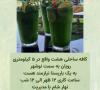 استخدام باریستا در نوشهر
